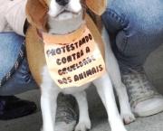Mensagens Sobre Protetores de Animais (2).jpg