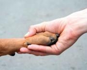 Mensagens Sobre Protetores de Animais (3).jpg