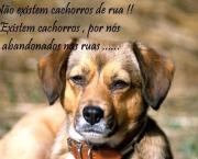 Mensagens Sobre Protetores de Animais (4).jpg