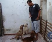 Mensagens Sobre Protetores de Animais (6).jpg