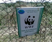 wwf-world-wide-fund-for-nature-6