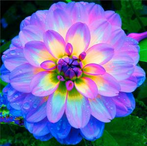 Mensagens sobre Flores